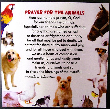 Prayer for the Animals Magnet